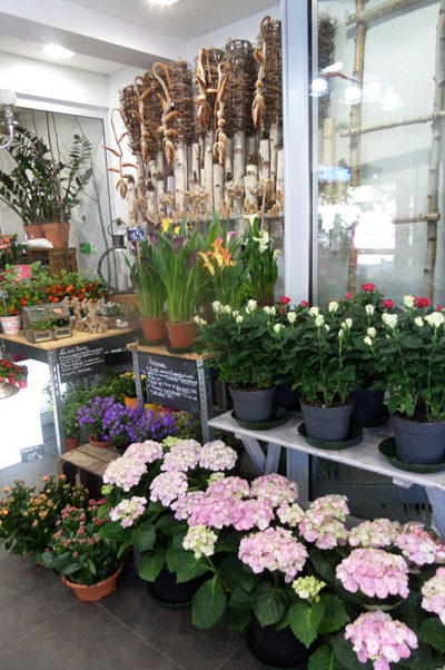 Fleuriste chinon fleurs en pot
