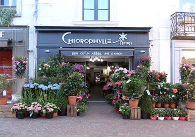 Chlorophylle fleuriste à Chinon