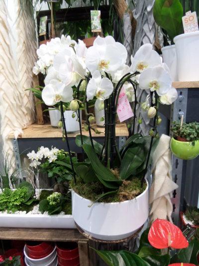 Offrir plantes et fleurs Chinon